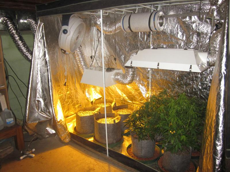 Grow Tent Setup Complete Guide For Beginners