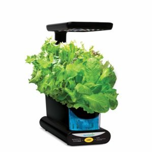 grow lights for lettuce