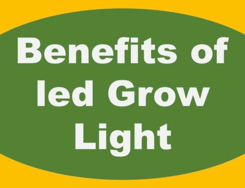 Benefits Of LED lights For Indoor Growing