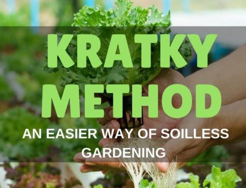 Kratky Method of Hydroponics