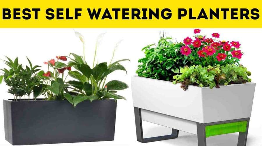 The 7 Best Self Watering Planters that Actually Works