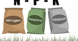 npk fertilizer guide