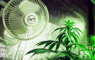 Ventilating-Your-Grow-Room
