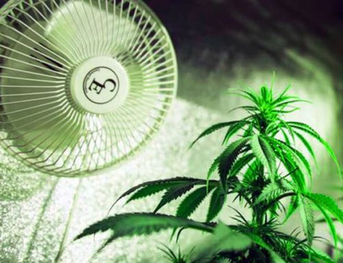 Improve Air flow in Your Cannabis Grow room