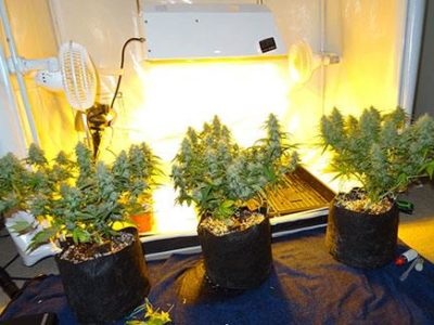 hps cannabis grow lights