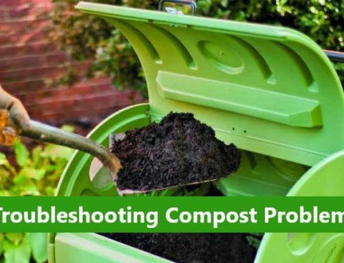 7 Common Problems with Home-made Compost