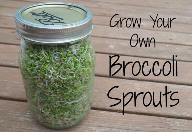 Grow-Your-Own-Broccoli-Sprout