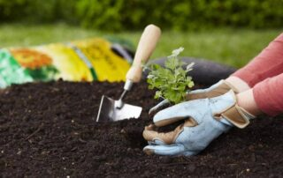 gardening for new growers