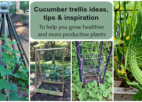 cucumber-trellis-ideas