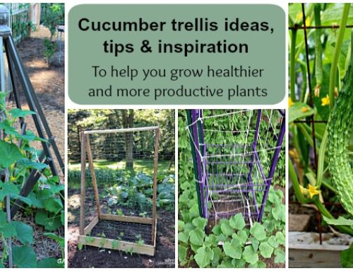 Cucumber trellis for Growing Vining Plants