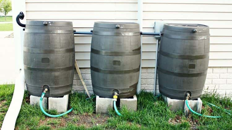 Best Rain Barrels for Collecting Rain Water