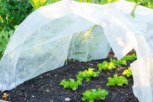 9 vegetables to grow in winter