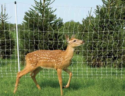 6 Ways to stop deer from eating your tomato plants