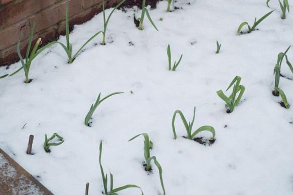 vegetable to grow in winter