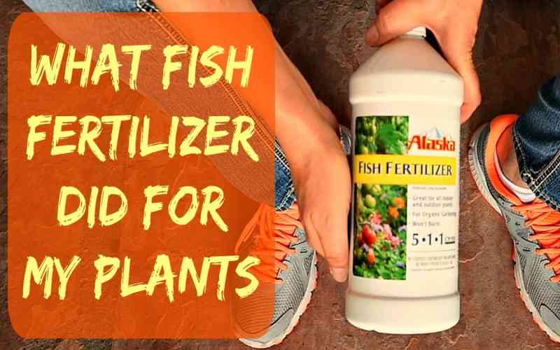 Fish Fertilizer For Plants | How to choose and use on houseplants