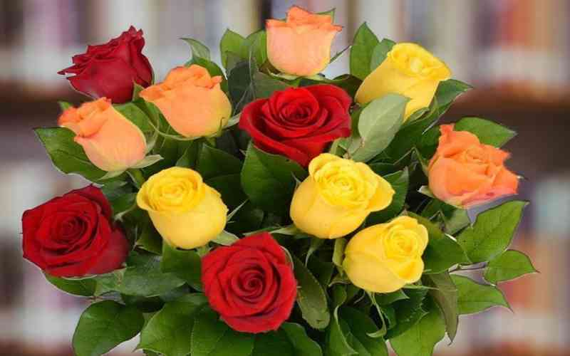 Are roses Poisonous to humans and pets? Should we eat